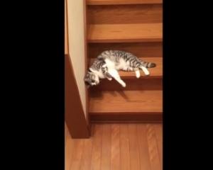 видео как кот на боку спускается с лестницы