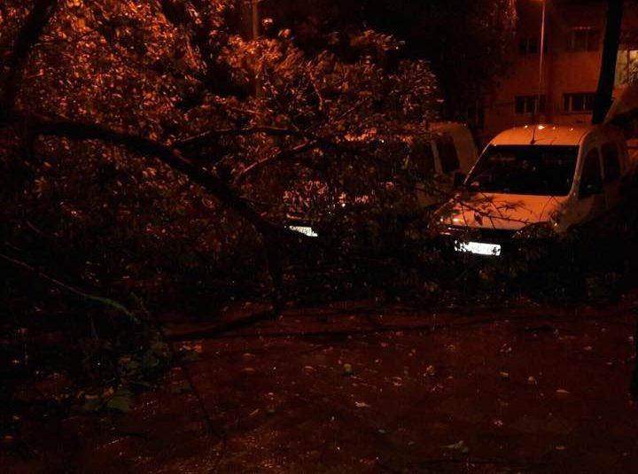 Циклон оставил без электричества 121 населенный пункт воЛьвовской области