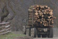 Карпати вирубка лісу