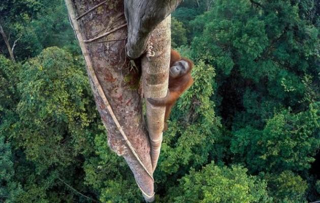 Переможці конкурсу фотограф натураліст