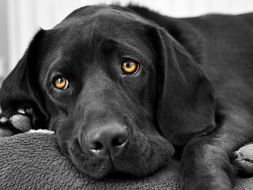 Чоловік під ЛСД врятував собаку