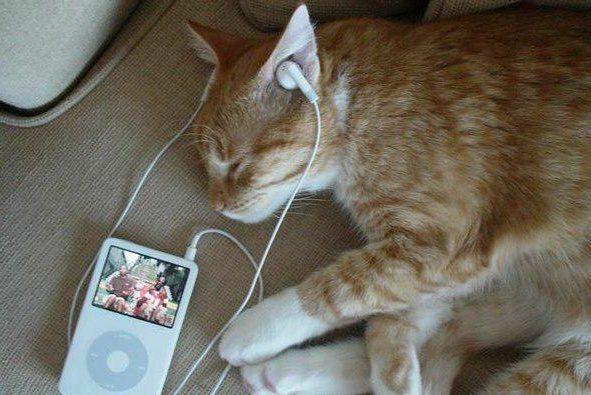 Композитор записав музичний диск для котів