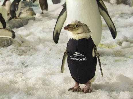 Пінгвін у гідрокостюмі