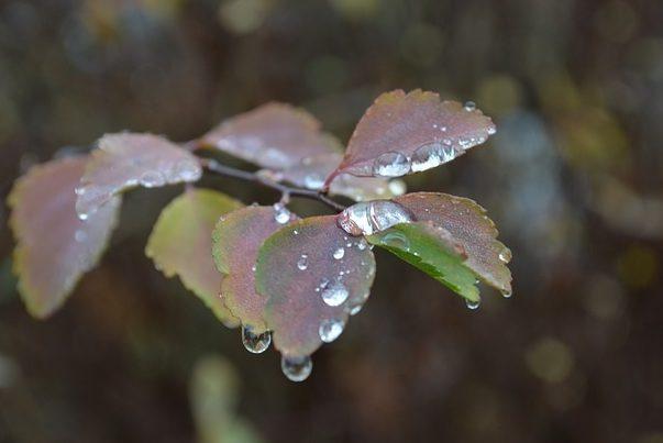 осінь листя погода дощ