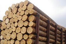 Заборона на експорт деревени