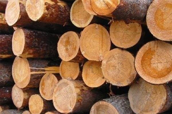 moratorij_na_eksport_lesa