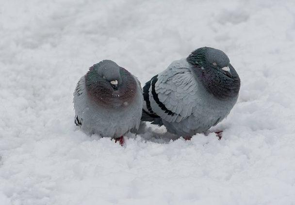 зима сніг погода