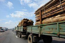 Експорт лісу
