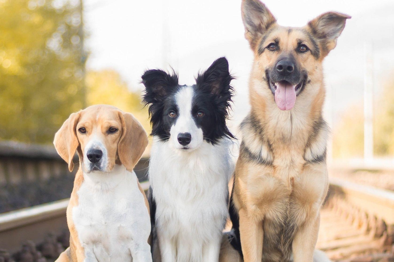 три собаки фото музея