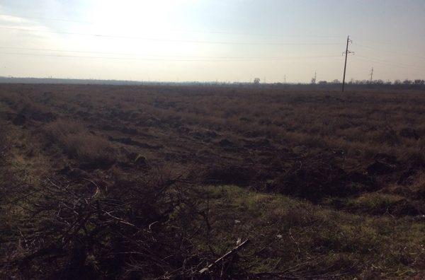 Под Одесской бульдозерами уничтожаются виноградники французского винодела— Рейдерский захват