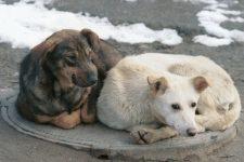 Тварини-злодії