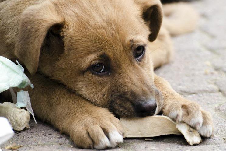 Електронні петиції про тварин