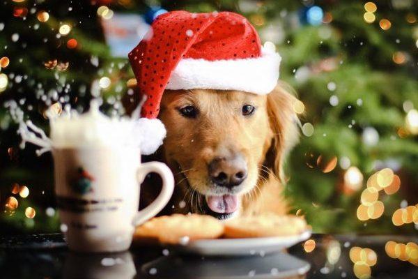 http://fakty.ictv.ua/wp-content/uploads/2016/12/26/3a509f68d611bb123466b3106c821a90-e1514283779604.jpg