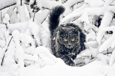 Кіт на снігу