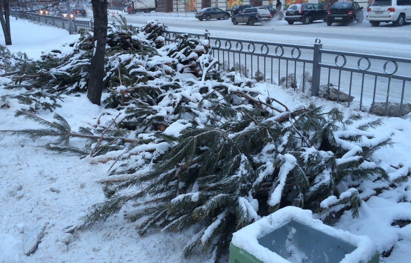 выброшенная елка фото могли или