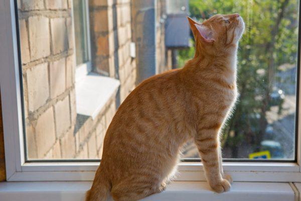 УЧернівцях з вікна багатоповерхівки випала дитина, намагаючись врятувати кота