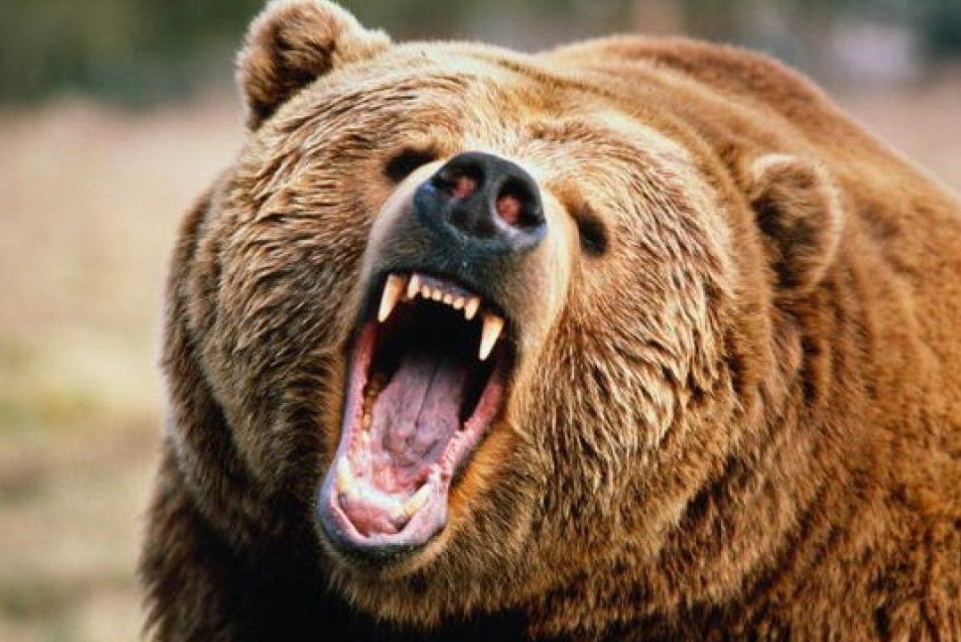 """Результат пошуку зображень за запитом """"ведмідь"""""""