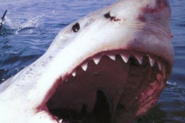 Голубая акула распугала отдыхающих напляжах испанской Мальорки