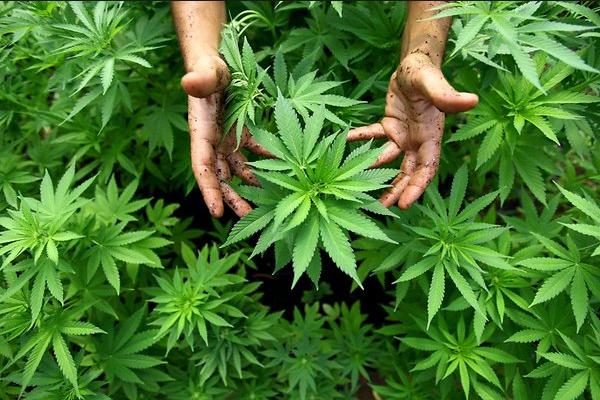 В Неваде началась продажа марихуаны в рекреационных целях