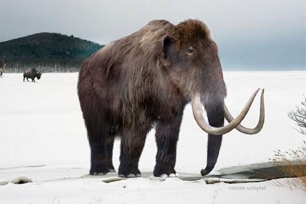Американский миллиардер инвестировал деньги впроект повоскрешению мамонтов