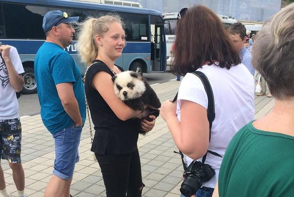 Панда вСочи, скоторой предлагали сделать фото, оказалась крашеным щенком