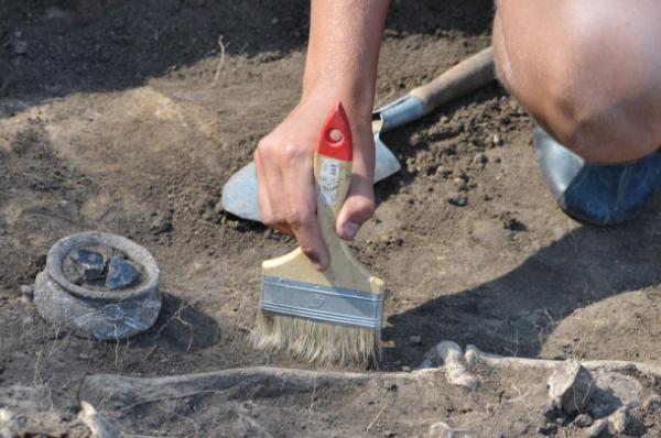ВСША ребенок отыскал останки старинного стегомастодона