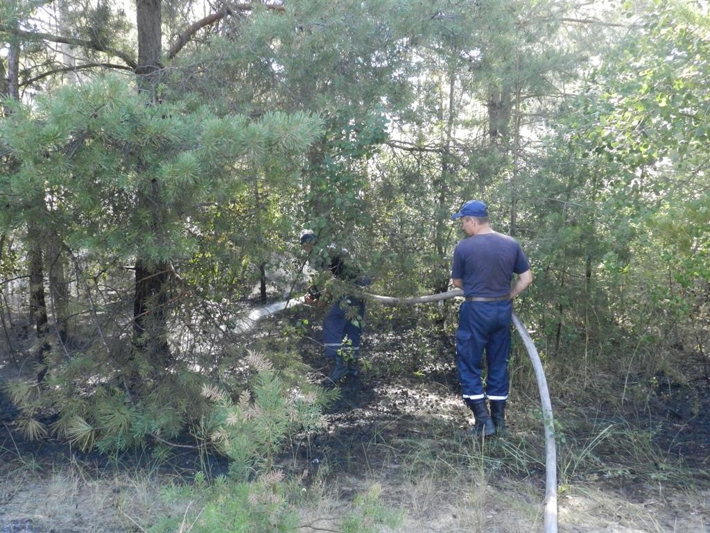 ВГолопристанском районе— лесные пожары