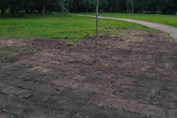 газон травой вниз
