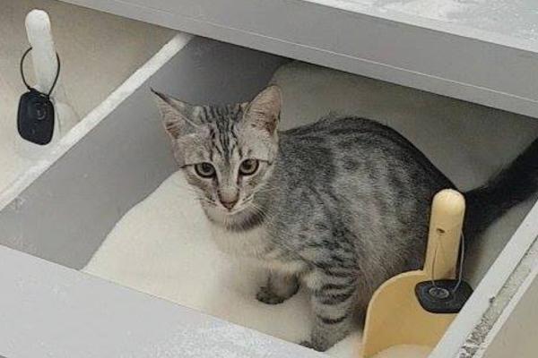 Укиївському супермаркеті зняли, як кішка використала ємність зцукром замість туалету