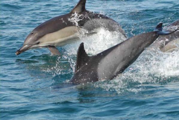 Дельфіни