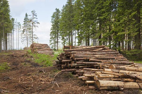 """Мінекології звинувачує Пістинську сільраду у рейдерському захопленні лісів НПП """"Гуцульщина"""""""