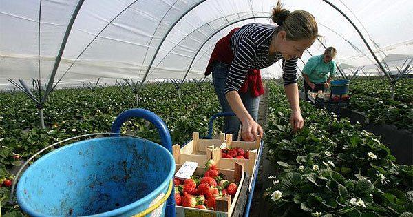 Поляки отказываются платить заработу украинским мигрантам— Заработки вПольше