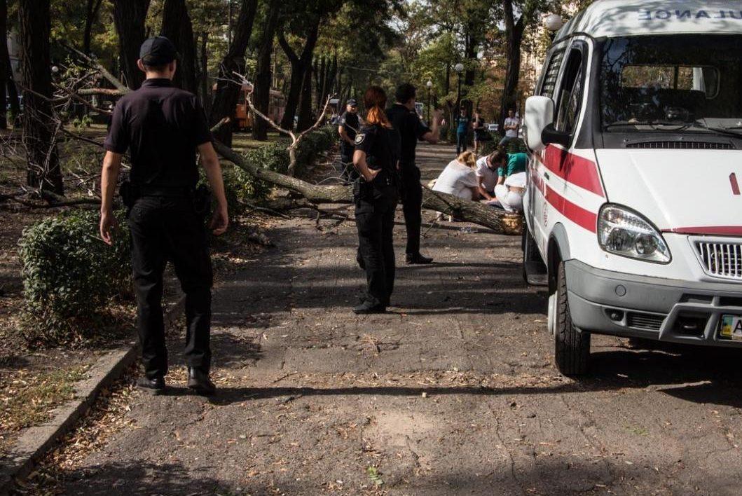 Вцентре Днепра упавшая ветка убила студентку