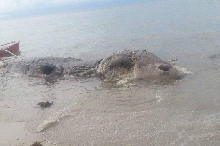 НаФилиппинах море выбросило наберег тушу неизвестного чудовища