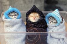 Погода коти