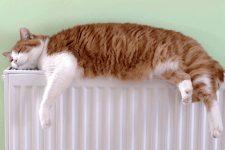 Кіт на батареї