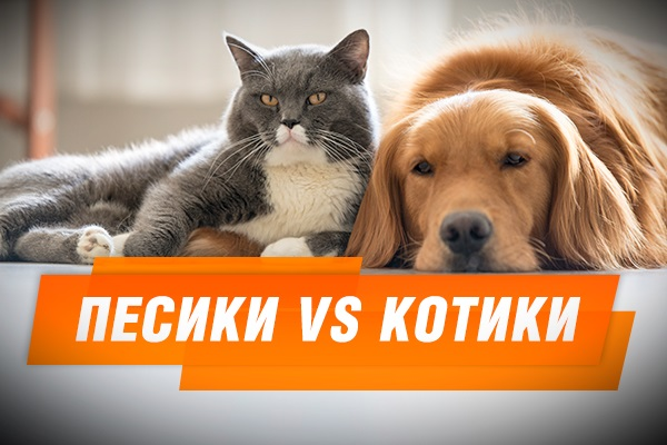 Песики vs котики