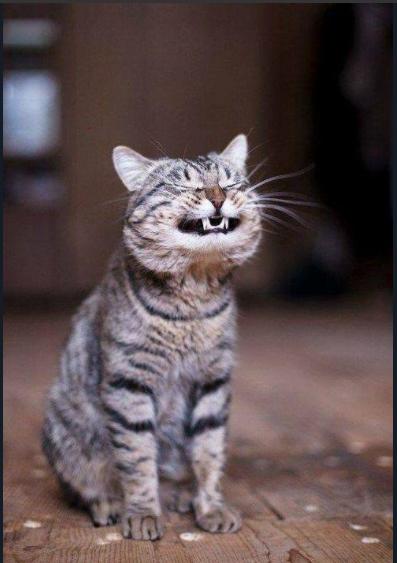 Посмішка кота