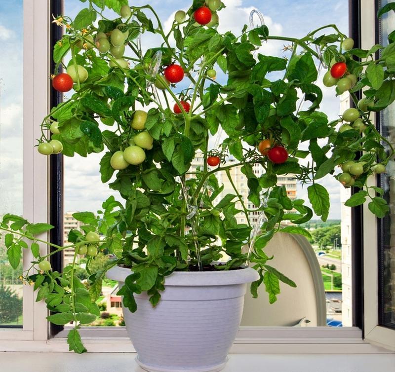 Как сделать огород на балконе.