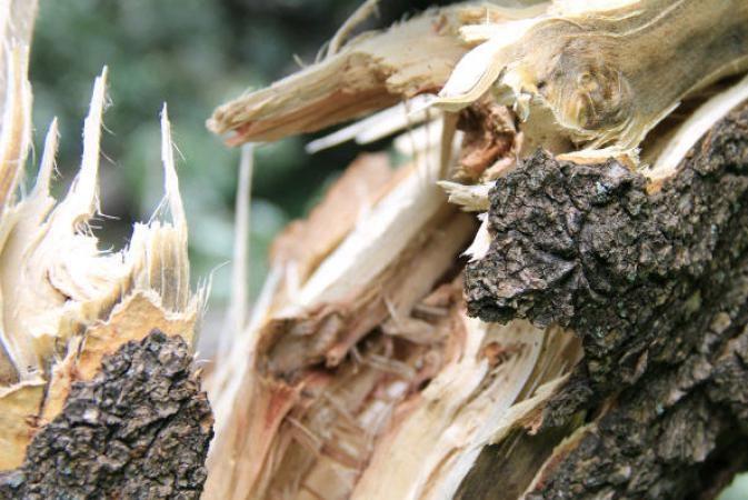 Ветер повалил 12 деревьев, травмирован 8-летний ребенок— циклон наПрикарпатье