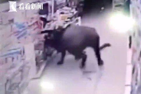 Буйвол у магазині