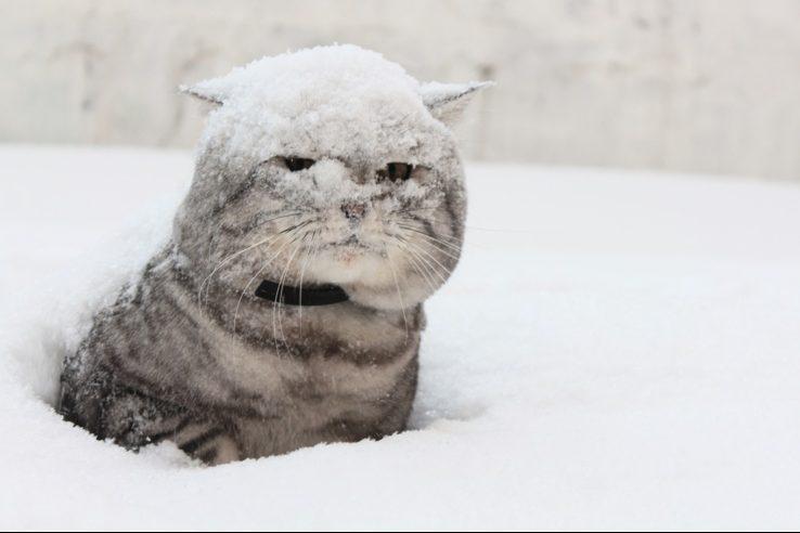 Кіт у снігу