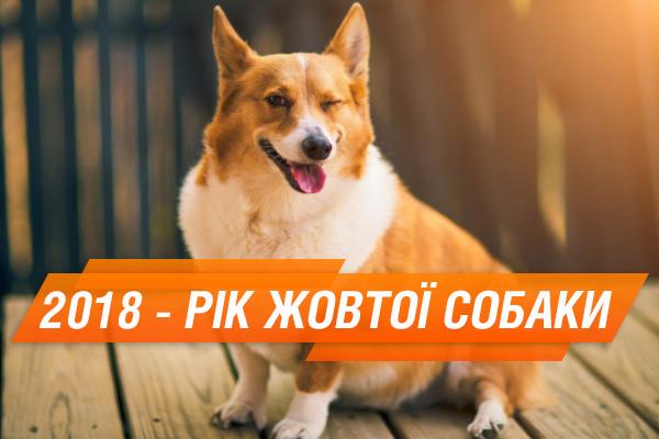 20.03.2018 | Год собаки 2018
