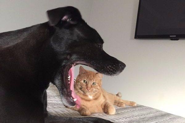 Кіт та собака