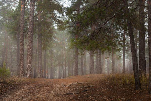 броварской лес