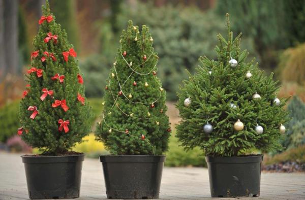 Цены на новогодние елки 2018: живые, искусственные, в горшках