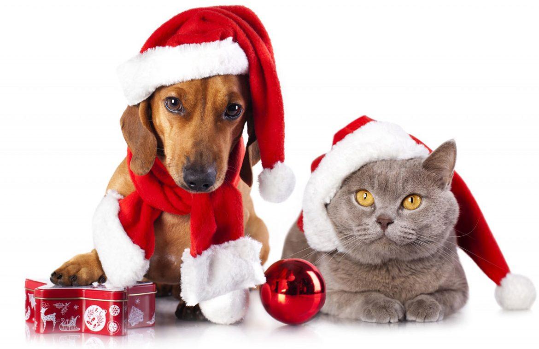 Что подарить на Новый год: Что подарить на год Собаки 2018?