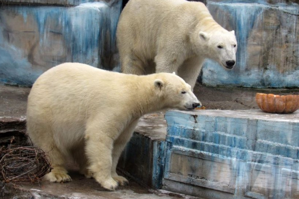 ВНиколаеве взоопарке родился белый медвежонок