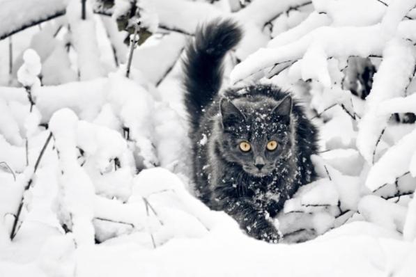 Синоптики прогнозируют сильные снегопады с18января