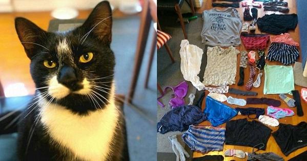 В новейшей Зеландии кот, который любит красть белье, поссорил влюбленную пару